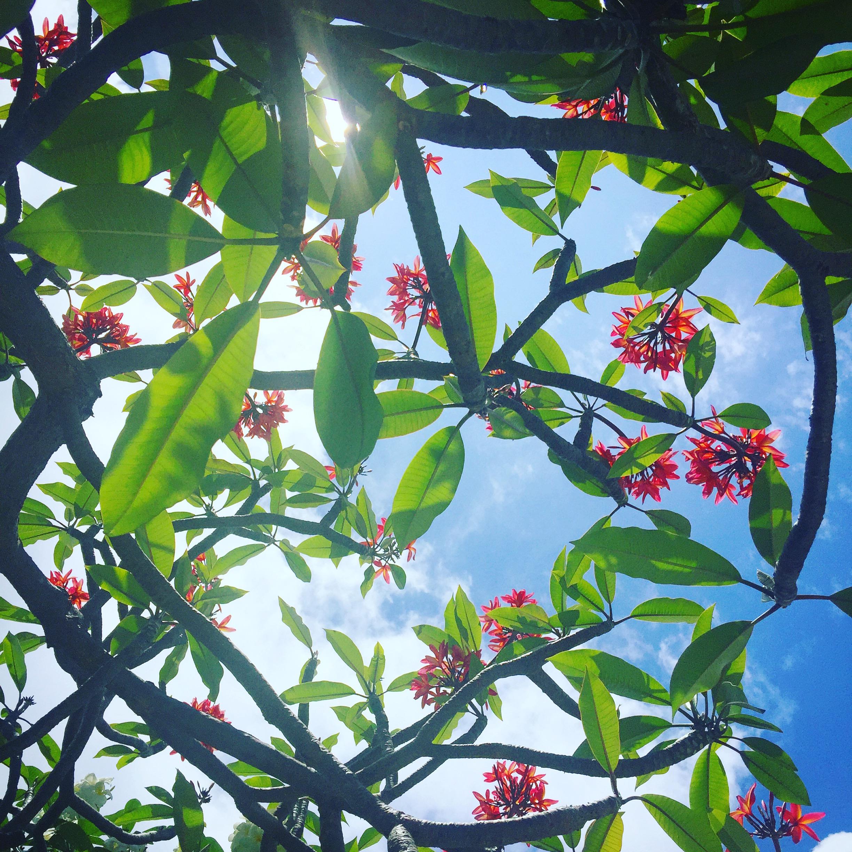 Aloha Ponopono diary